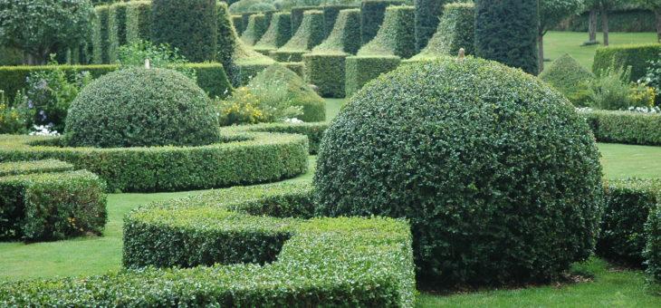 Que faut-il savoir sur la sculpture végétale ?