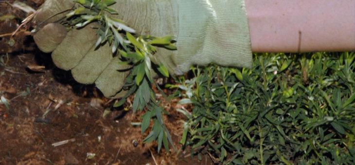 Que faut-il savoir sur le désherbage d'un jardin ?