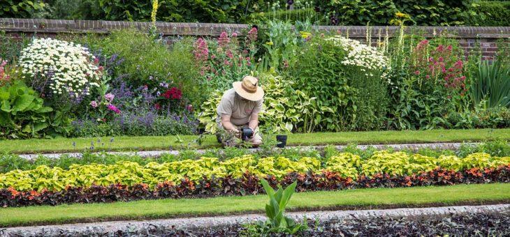 Utilisation du carbonate de chaux dans un jardin