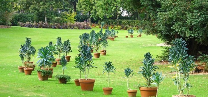 L'élagage d'arbre, un travail indispensable pour un meilleur entretien des espaces verts