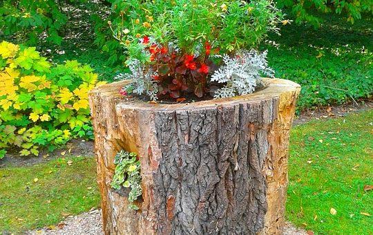 Tout savoir sur la taille des arbres d'ornement