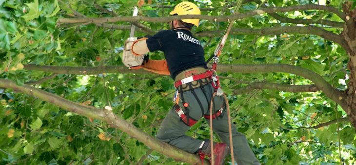 7 erreurs courantes faites pendant un élagage d'arbres par soi-même