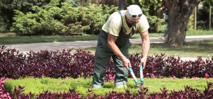 Comment entretenir son jardin soi-même ?