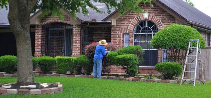 Travaux de jardinage : l'entretien à faire en février