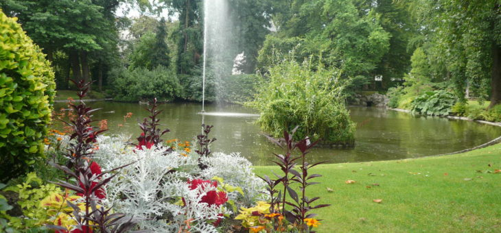 Le jardinage sans eau : comment et pour quelles plantes?