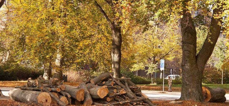Abattage d'un arbre dans son jardin : comment calculer le prix?