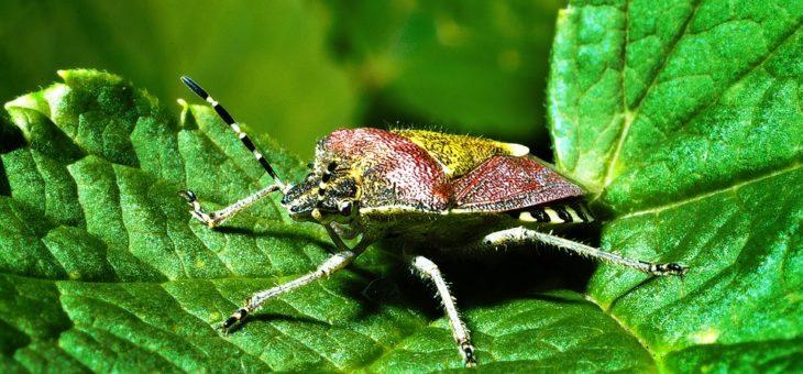 Bon a savoir concernant les insectes du jardin