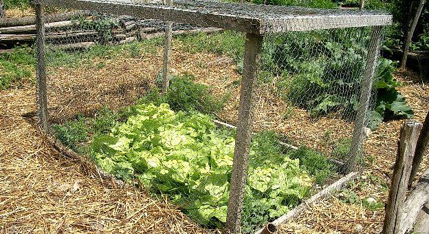 Quels sont les différents types de paillage de jardin?