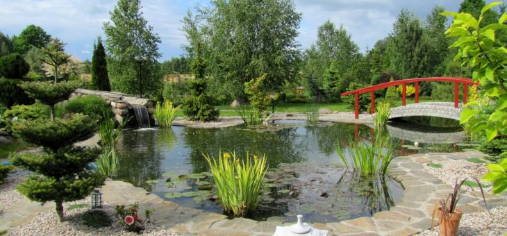 Astuces pratiques pour réussir la création d'un jardin japonais