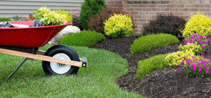 La rénovation de pelouse étape par étape