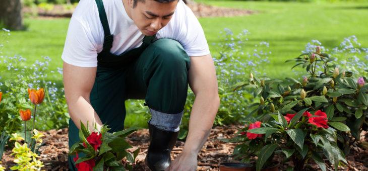 Tout savoir sur l'entretien du jardin
