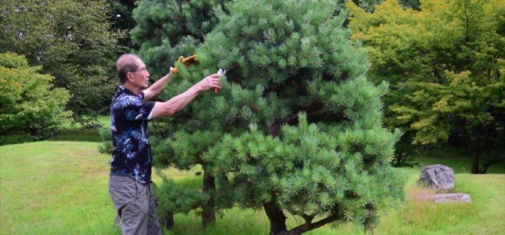 Comment réussir l'élagage des arbres dans son jardin?
